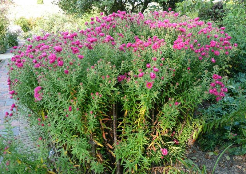 planter rustiques et fleuri pour massif