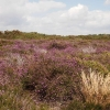 dunwich-heath-1
