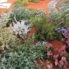 australian-garden-1