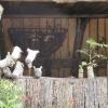 childs-garden-in-wales-2