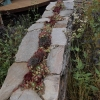 rbc-new-wild-garden-2