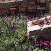 rbc-new-wild-garden-4