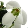 galanthus-sam-arnott-flower1