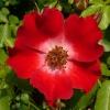 rosa-eyepaint-detail-1