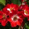 rosa-eyepaint-detail-2