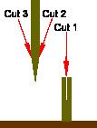 Apical-wedge graft